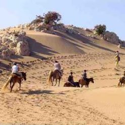FB Stables: Horseback Riding near The Giza Pyramids