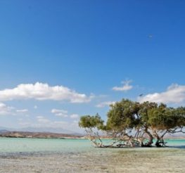 Marsa Alam: A Veteran's Guide to the Red Sea Town