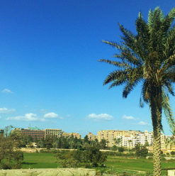 Donya Desee: Hope for a Green Cairo