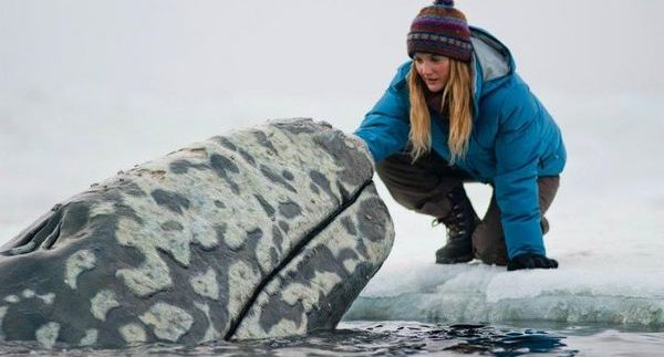 Big Miracle: Feel-Good Family Film