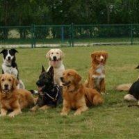 ميدل إيست ويندز: أكاديمية لتعليم الكلاب فنون الطاعة والحراسة
