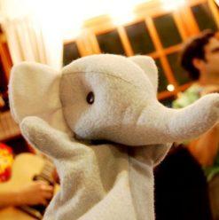"""عيد ميلاد """"فيل"""" في صوفي"""