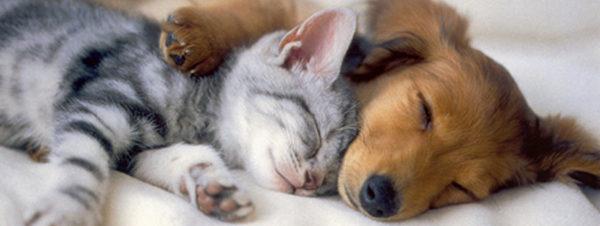 حفل الجمعية المصرية لأصدقاء الحيوان في سويس كلوب