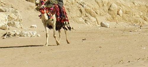 الأسبوع الألماني: البدو وقانونهم في DAAD