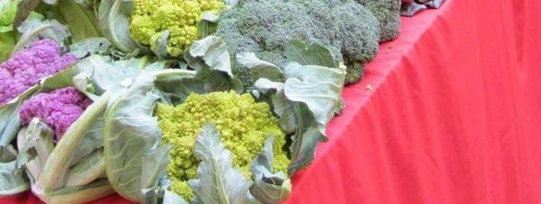سوق الربيع للمزارعين في مركز نن
