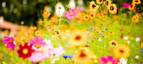الاحتفال باليوم العالمى للبيئة بساقية الصاوي