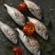 El Gomhoria Fish