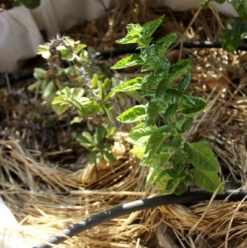 Nawaya: Permaculture and Rooftop Gardening in Cairo
