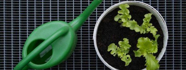 ورشة نوايا لعمل حديقة سهلة من المطبخ