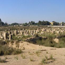 إيفا لانج في المعهد الهولندي للآثار المصرية والبحوث العربية