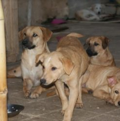 The Egyptian Society for the Mercy of Animals: Rescuing Cairo's Stray Cats & Dogs