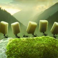 Minuscule: Valley of the Lost Ants: حرب النمل