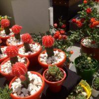 Khadra: Gardening Enthusiasts' Dream at Americana Plaza