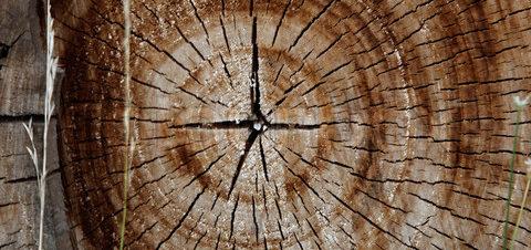ورشة فنية من جذوع الشجر بديوان المعادي