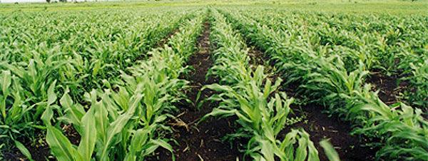 ندوة عن الاستصلاح الزراعي بساقية الصاوي