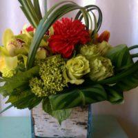 سبرينج فلاورز: نباتات طبيعية وزهور في الدقي