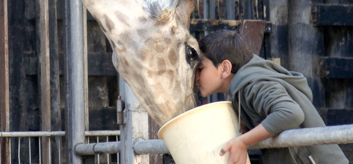Giraffada: علاقة الإنسان.. والحيوانات