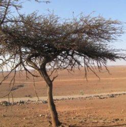 ندوة منتدى البيئة بساقية الصاوي