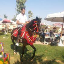 الريف العربي للخيول – Rural Arab Horses