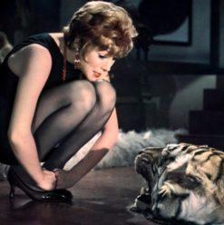 """أسبوع الأفلام الكلاسيكية بآرت رووم سبيس: فيلم  """"Sweet Charity"""""""