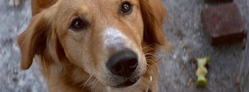 A Dog's Purpose: Sugary, Over-Sentimental Dog Fest