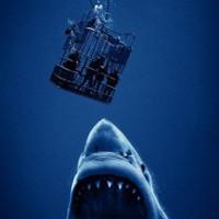 Open Water 3: It's No Jaws, but It's Okay