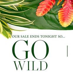 Go Wild Bazaar at Le Pacha