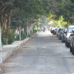 Greenish to Launch Its 'Aware Streets Project' in Maadi