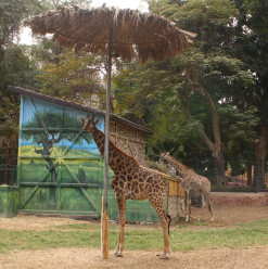 BREAKING NEWS: Giza Zoo to Temporarily Close