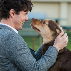 A Dog's Way Home: If You Love Dogs, You Will Cry
