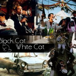 'Black Cat, White Cat' Screening at Cinema Daal