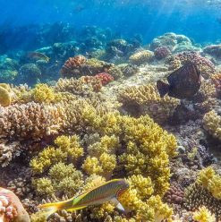 Red Sea Governorate to Ban Plastic