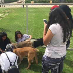 IN PICTURES: ARA & RHK Raise Awareness for Stray Dogs at AUC Event