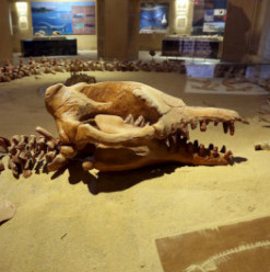 The Egyptian Geology Museum: One of Cairo's Most Interesting Sights