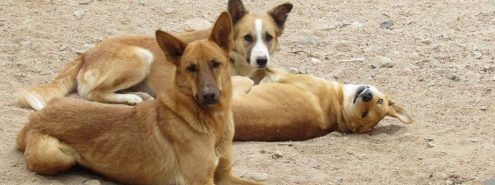 Egypt to Announce Final Verdict on Stray Dog Killings This July