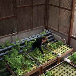 A Greener Cairo: Governorate Launches Rooftop Garden Initiative
