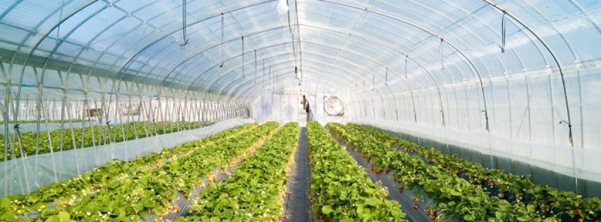 Egypt's Greenhouse Project Continues