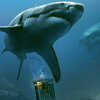 ‎47 Meters Down - Uncaged: An Implausible Shark Sequel