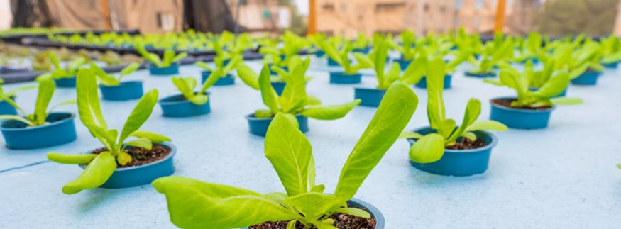 Urban Greens Egypt: Fresh Home-Grown Produce from Rooftop to Table