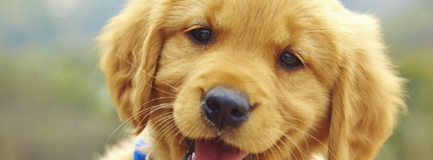 New Conditions for Pet Dog Licenses Announced