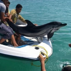 Dolphin Rescued in Hurghada