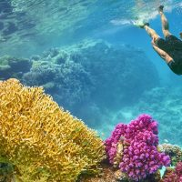 Egypt's Abu Dabbab Bay Listed Among Lonely Planet's Best Snorkelling Hotspots in the World