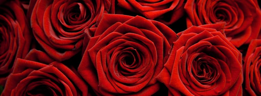 It's a Valentine's Day Celebration that you Don't Want to Miss at Sheraton Cairo Hotel & Casino
