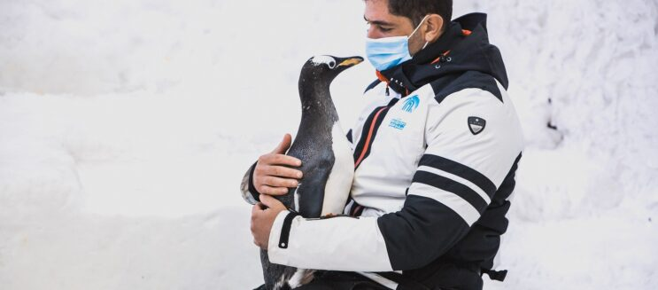 Happy Birthday to Ski Egypt's leading Penguin, Sultan!