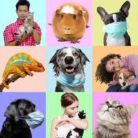 Top Rated Pet Stores in Cairo