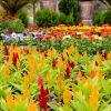 دليل كايرو 360 الكامل لمعرض زهور الربيع 2019